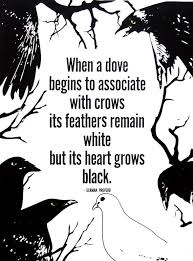dove and crows quote