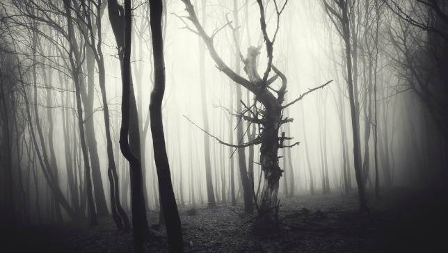 scary-woods1